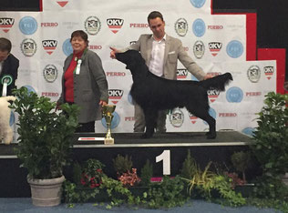 """Miles"" BEST IN GROUP!!! Miles was handled by Christopher Orthacker- Thank you so much!"