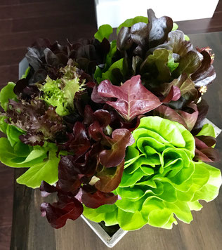 Balcony to Table Lettuce Bouquet.