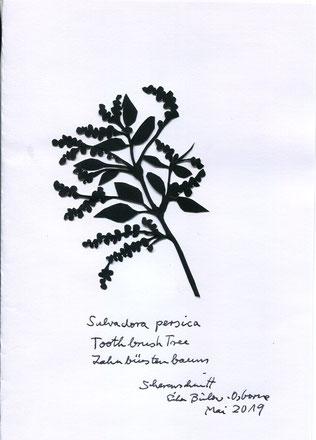(c) Erika Bulow Osborne  Scherenschnitt Zahnbürstenbaum