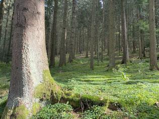 durch verwunschene Wälder