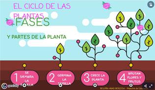 FASES Y PARTES DE LA PLANTA