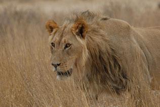 Krüger Pepamobil bereist den Nationalpark