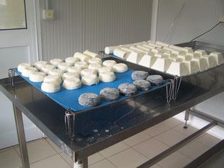 fromages de chèvre en affinage à la fromagerie du Purdeau