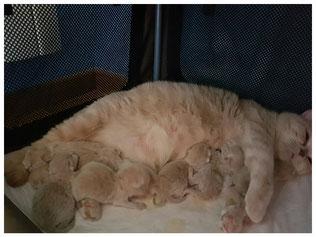 Une mère parfaite pour des chatons parfaits