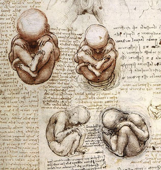Fötus im Bauch nach Leonardo da Vinci