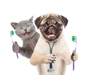 Nous aussi, on se brosse les dents !