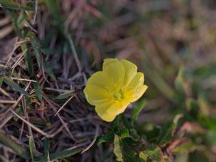 お散歩途中に見つけた小さなお花