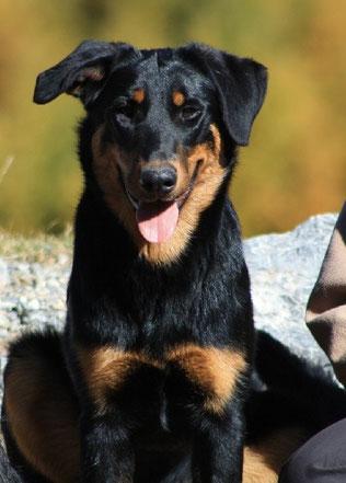 l'Arche-d-rury-éducation-canine-77, pension-pour-chien-77