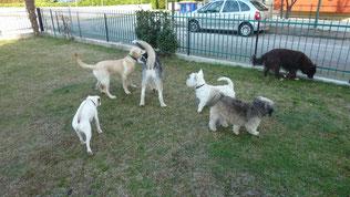 Paco,Dingo,Balto,Togo,Zara e Dakota