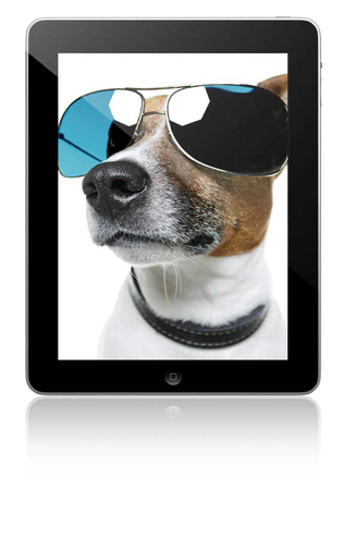website4everyone dog tablet