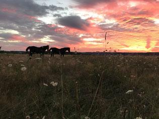Pferde im Sonnenuntergang