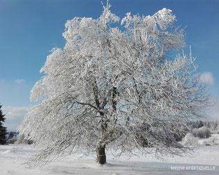 Baum im Schnee, Schneebaum, Hoherodskopf im Winter