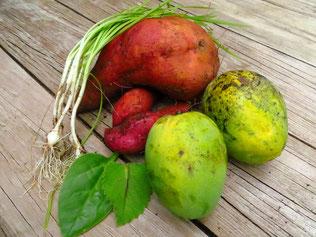 Wir dürfen uns aus dem Garten bedienen. Heute gibt es u.a. Süsskartoffeln, Frühlingszwiebeln und Mangos zum Dessert.