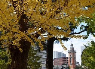 銀杏越しの横浜市開港記念会館
