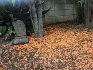 地面に押した金木犀の花