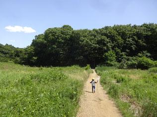 坂月川 雑木林 雑木の庭