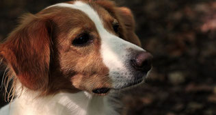 Hundeschule, Seminare, Lernen, Julius, positive Verstärkung, ohne Gewalt