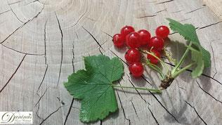 Rote Johannisbeeren haben zahlreiche gesunde Inhaltsstoffe. Mehr dazu sowie ein köstliches Ribiselkuchen Rezept auf www.daninas-kunst-werkstatt.at