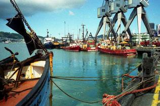 im Fischereihafen von Wellington
