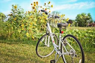 Fahrrad Natur