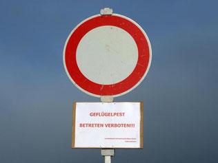 Die Vogelgrippe-Gefahr schien nachzulassen. Nun gibt es einen neuen Fall in Mecklenburg-Vorpommern - bei einem Wildvogel. Foto: Patrick Seeger