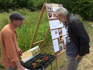 """""""Adoptez une variété rare de millets"""" à la porte ouverte du Jardin des Forges à St Nazaire, juin 2016"""