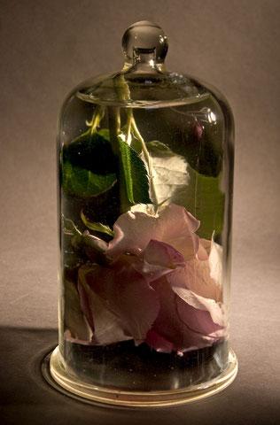 Digital montage of Rose in water