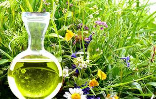ANTIBIOTISCHE PFLANZENSTOFFE  Seit Jahrhunderten setzt die traditionelle Klostermedizin antibiotisch wirksame Arzneipflanzen ein, zum Beispiel bei Infektionen der Atem- und Harnwege. Erfahren Sie, auf welchen Inhaltsstoffen ihre Wirkung beruht.