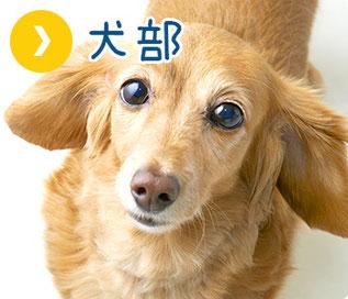 ペットシッター 犬