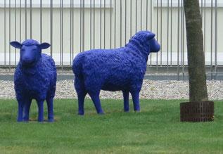 18. April 2016 - Blaue Schafe. Müssen sie raus oder dürfen sie bleiben?