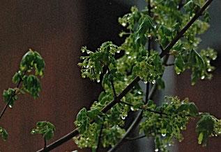 19. April 2016 - Im Regen stehen