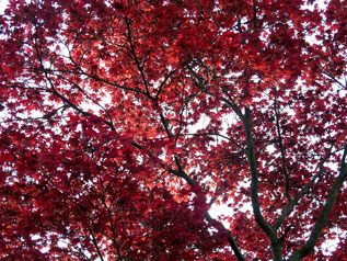 22. April 2016 - Herbstfarben im Frühling