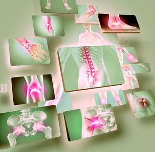 Anatomiekenntnisse für Yoga-Lehrer