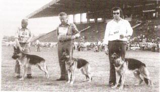 Das Bild zeigt von links:  Dieter Walz mit Aslan vom Klämmle, Weltsieger Jugendklasse Rüden  Herr Reuter mit Atrice vom Klämmle, Weltsiegerin Jugendklasse Hündinnen und Herr Karl Reuter mit Amun vom Kehle, 2.Platz Jugenklasse Rüden
