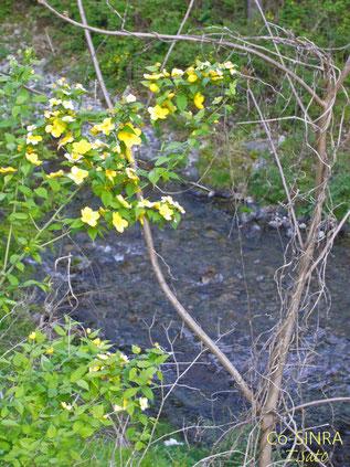 渓流に咲く花