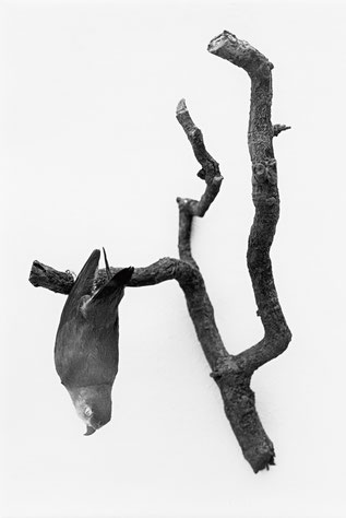 Heiner Blumenthal l Vogel/Ast l, 1994, 30,4 x 21,5 cm, on baryta paper