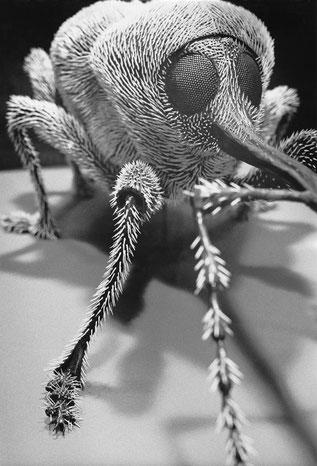 Heiner Blumenthal l Insekt, 1994, 30,4 x 20,6 cm, on baryta paper