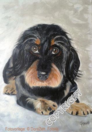 Hundeporträt:  Rauhaardackel liegend. Hund schaut den Betrachter an. Sichtbar graubrauner Kopf mit blonder Schnauze sowie Vorderpfoten und linke Hinterpfote, Tiermalerei, gemalte Tierportraits nach Fotovorlage, Tiere zeichnen lassen