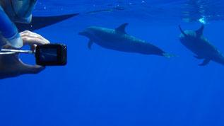 observation sous marine respectueuse des dauphins et des baleines sous l'eau filmer avec une gopro-Duocean