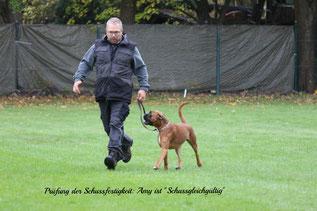 Boxer Hund vonderwaldnielerheide ZTP