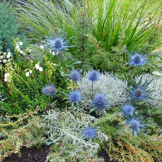 Grabbepflanzung in Blautönen