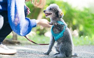 ペットとコミュニケーション出来るように | 犬が吠えるのには理由がある