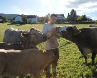 Manfred umringt von Kühen und Kälbern