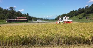 稲刈り状況写真