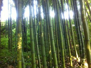 Bambouseraie de Miripili
