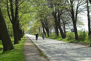 Sehr gut ausgebaute Radwege führen Sie durch das Hasetal.