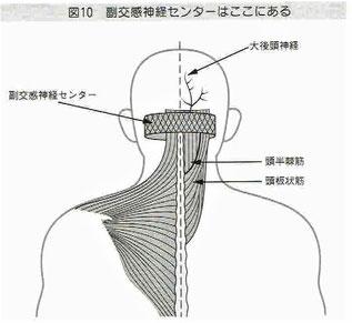 首の後ろには自律神経のセンター(脳神経核)がある。