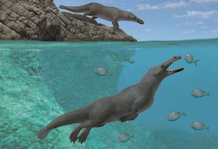 Reconstrucción artística de dos individuos de Peregocetus, uno de ellos de pie sobre la costa rocoso del Perú actual y el otro cazando peces. La presencia de un golpe de suerte en la cola sigue siendo hipotética. / A. Gennari