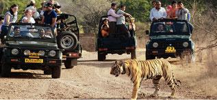 La Reserva de Tigres de Kanha recibe 100 mil turistas al año aproximadamente. ©Foto: theholidayindia.com