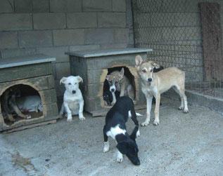 Blue - weißer Junghund links